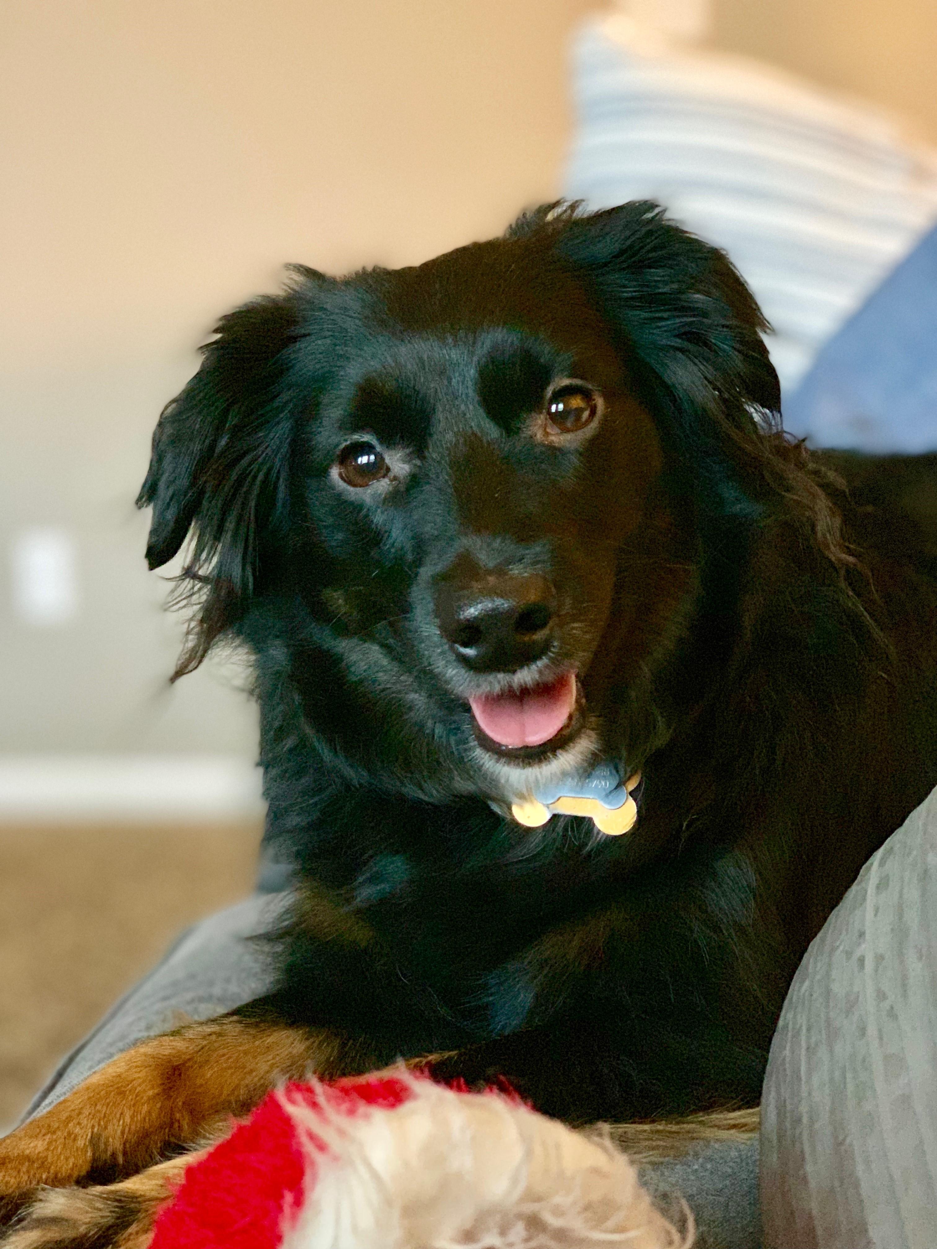 Our Dog, Bear