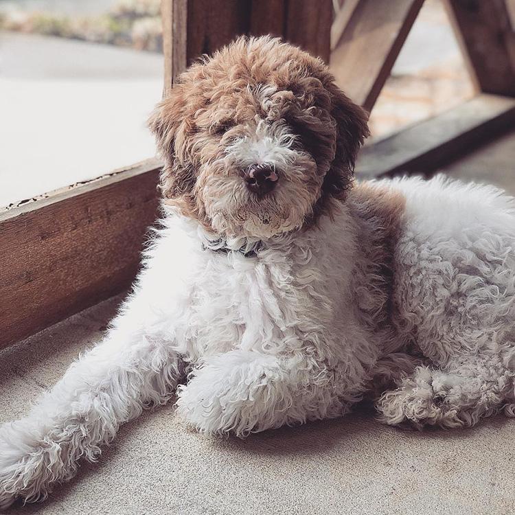 My Dog Louie